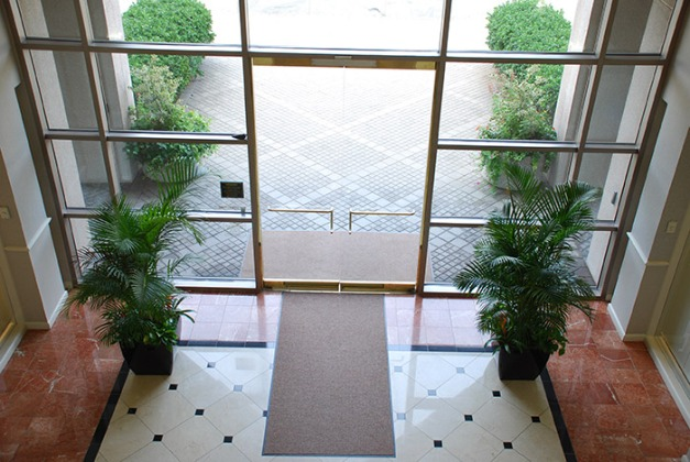 Kentia Palms in Lobby Entrance