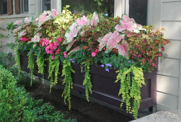 Planting using Begonis, Maiden Hair Fern and Coleus
