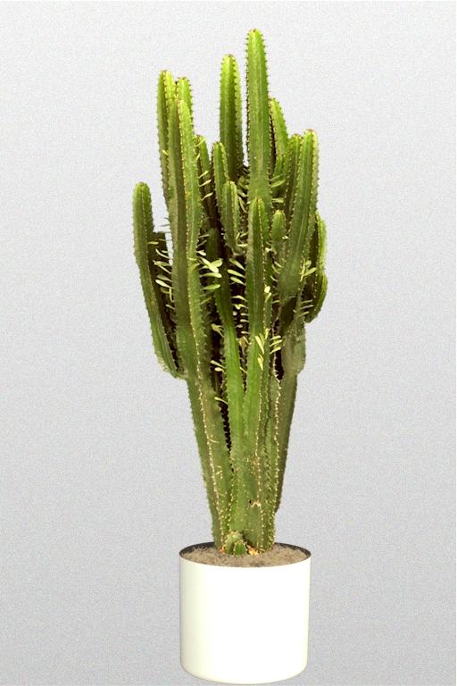 CactusEuphorbiaa10