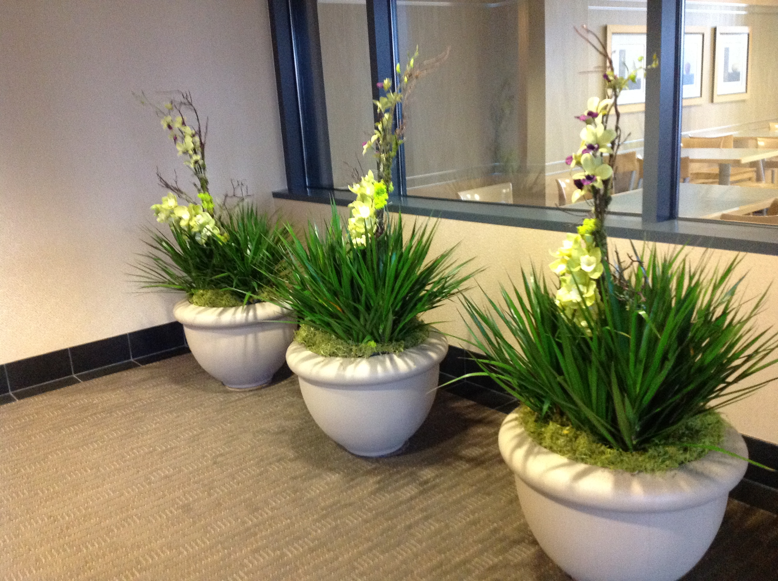 Interior plantscapes welcome to green life for Plantas decorativas para interiores