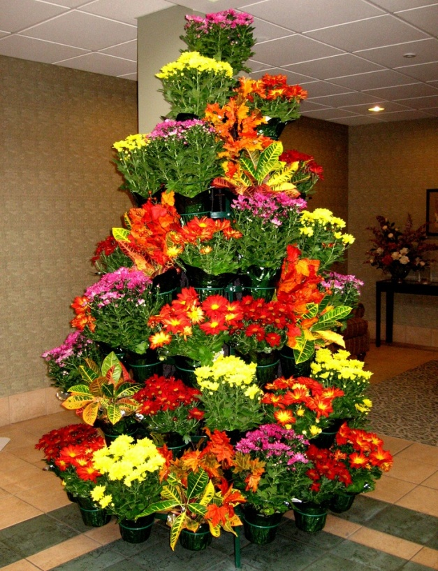 Living Christmas Tree with Crotons and Mums