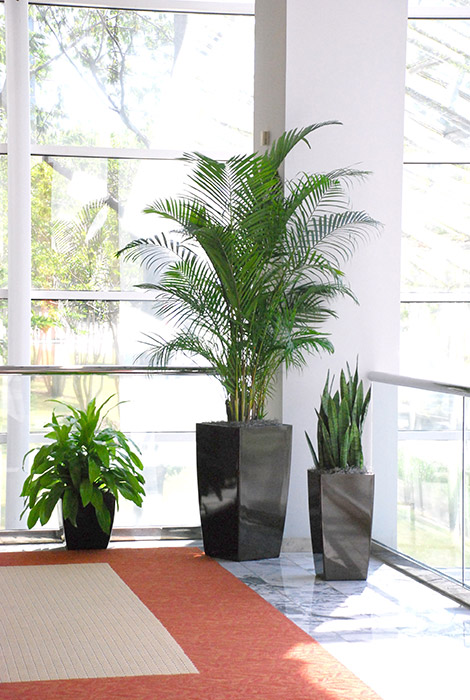 Interior Plantscapes Welcome To Green Life