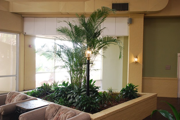 Planter bed with Kentia Palms and Janet Craigs