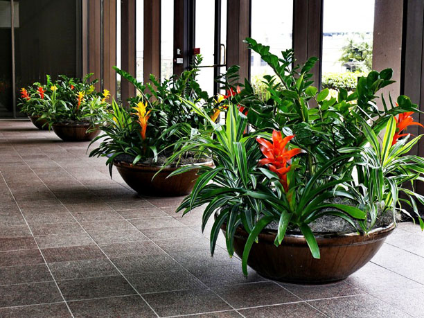 Large bowl containers with zz plants and bromeliads
