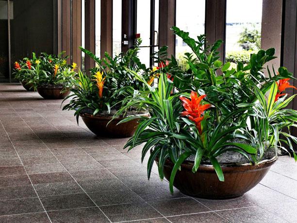 Great ZZ Plants And Bromaliads