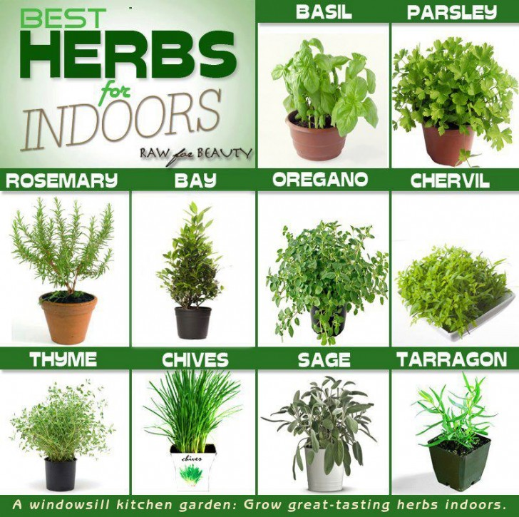 Herb gardens welcome to green life - Best herbs to grow indoors ...