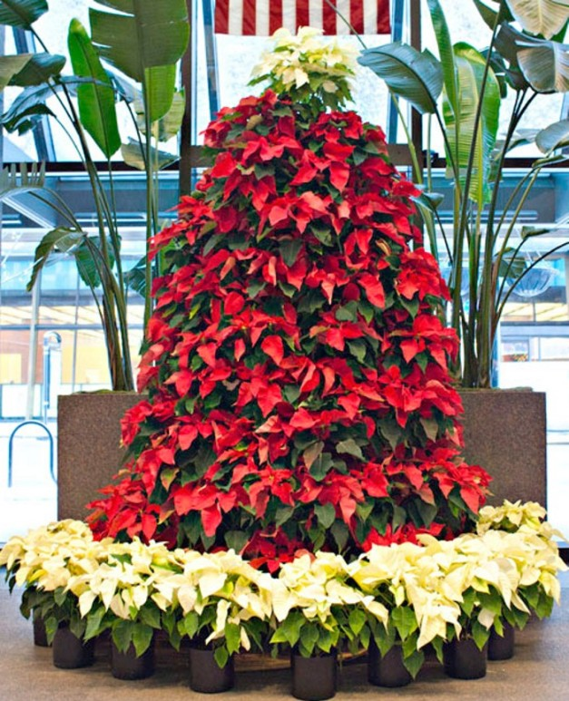 Poinsettia Tree-Red on White Base