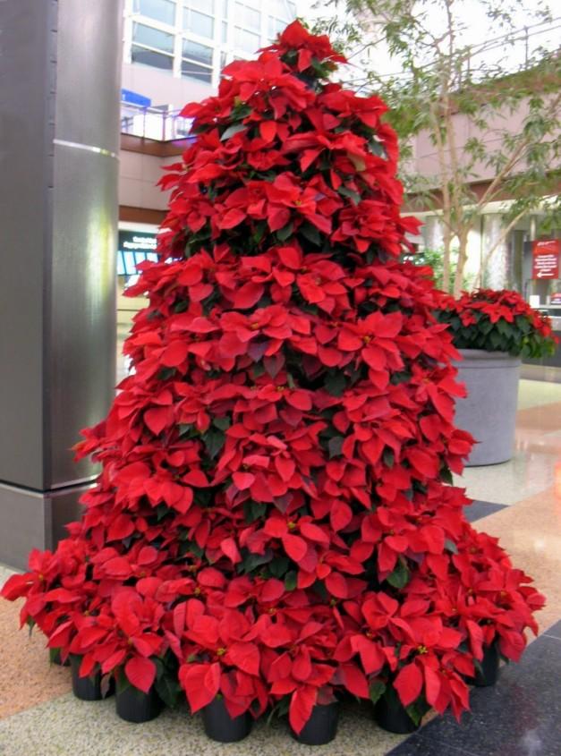 Red Poinsettia Tree
