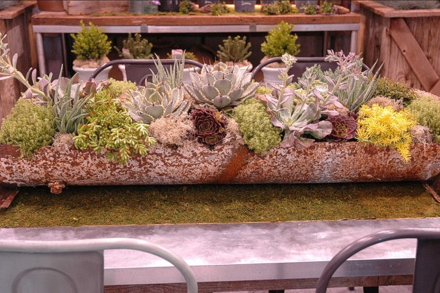 Display 6. A tightly planted mix of varieties of Sedum, Agave (spiked leaf tips), Hens-and-Chicks, Maternity Plants, and others.